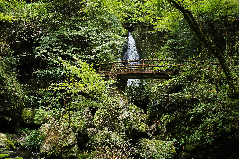 長沢の滝(津野町)|一枚絵のように美しい名爆