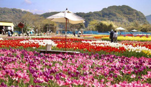 かがみ花フェスタ|四国最大級のチューリップ祭り