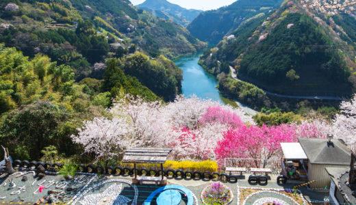 花の里公園(仁淀川町)|仁淀川を一望!花桃が彩る桃源郷
