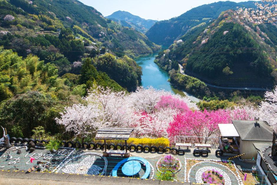 花の里公園(仁淀川町) 花桃が咲き誇る!地元民が作り上げた小さな公園